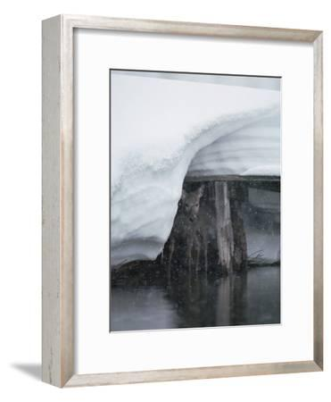 White-Tailed Deer (Odocoileus Virginianus) Hiding under Bridge in Snowstorm, Yellowstone-Michael S^ Quinton-Framed Photographic Print