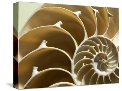 Cross Section of a Chambered Nautilus Shell, Nautilus Pompilius-Joe Petersburger-Stretched Canvas Print