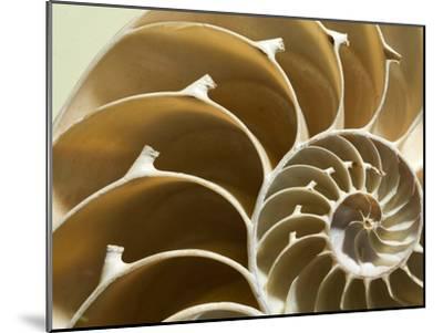 Cross Section of a Chambered Nautilus Shell, Nautilus Pompilius-Joe Petersburger-Mounted Photographic Print