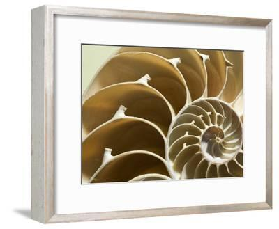 Cross Section of a Chambered Nautilus Shell, Nautilus Pompilius-Joe Petersburger-Framed Photographic Print