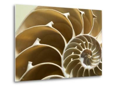 Cross Section of a Chambered Nautilus Shell, Nautilus Pompilius-Joe Petersburger-Metal Print