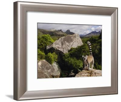 Ring-Tailed Lemur (Lemur Catta), Overlooking the Andringitra Mountains, Madagascar-Pete Oxford-Framed Photographic Print