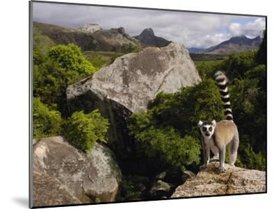 Ring-Tailed Lemur (Lemur Catta), Overlooking the Andringitra Mountains, Madagascar-Pete Oxford-Mounted Photographic Print