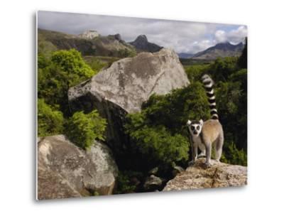 Ring-Tailed Lemur (Lemur Catta), Overlooking the Andringitra Mountains, Madagascar-Pete Oxford-Metal Print