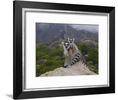 Ring-Tailed Lemur (Lemur Catta) Mother and Young, Near Andringitra Mountains, Madagascar-Pete Oxford-Framed Photographic Print