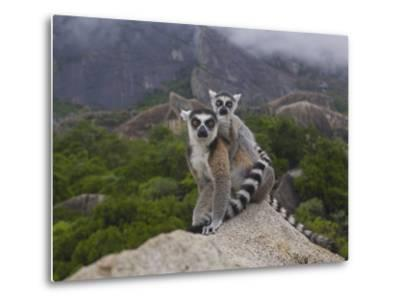 Ring-Tailed Lemur (Lemur Catta) Mother and Young, Near Andringitra Mountains, Madagascar-Pete Oxford-Metal Print