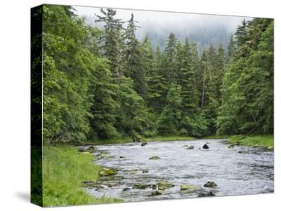 Grizzly Bear (Ursus Arctos Horribilis) Fishing, Pleasant Bay, Pleasant Bay, Alaska-Konrad Wothe-Stretched Canvas Print