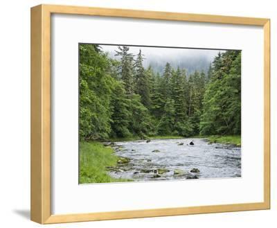 Grizzly Bear (Ursus Arctos Horribilis) Fishing, Pleasant Bay, Pleasant Bay, Alaska-Konrad Wothe-Framed Photographic Print