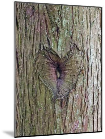 A Heart Carving in a Tree at Englishman River Falls Provincial Park-Rich Reid-Mounted Photographic Print
