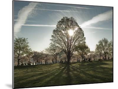 Cherry Blossoms at the Tidal Basin in Washington D.C.-Karen Kasmauski-Mounted Photographic Print