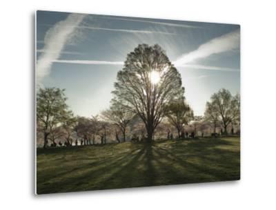 Cherry Blossoms at the Tidal Basin in Washington D.C.-Karen Kasmauski-Metal Print