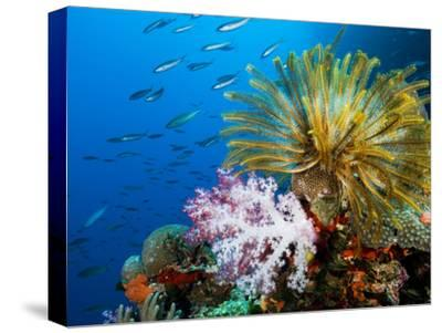 Chrinoid and a Soft Coral Tree Decorate the Edge of a Coral Reef-Mauricio Handler-Stretched Canvas Print