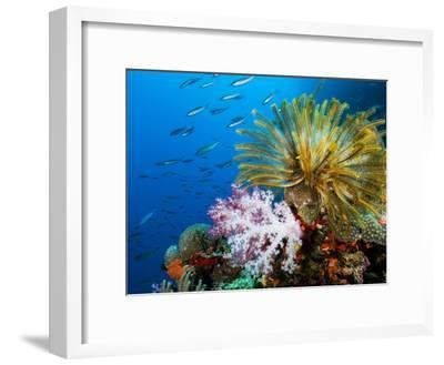 Chrinoid and a Soft Coral Tree Decorate the Edge of a Coral Reef-Mauricio Handler-Framed Premium Photographic Print