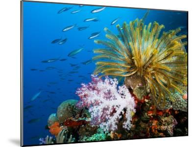 Chrinoid and a Soft Coral Tree Decorate the Edge of a Coral Reef-Mauricio Handler-Mounted Premium Photographic Print