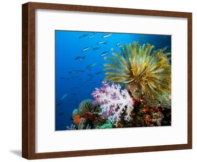 Chrinoid and a Soft Coral Tree Decorate the Edge of a Coral Reef-Mauricio Handler-Framed Photographic Print