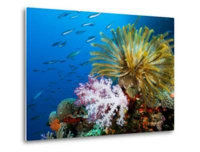 Chrinoid and a Soft Coral Tree Decorate the Edge of a Coral Reef-Mauricio Handler-Metal Print