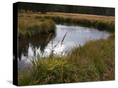 Grasslands Along the Banks of the Gibbon River-Marc Moritsch-Stretched Canvas Print