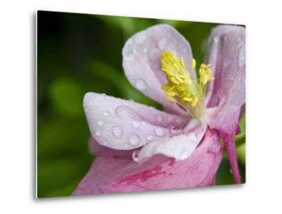 Water Droplets on a Lenten Rose Flower-Brian Gordon Green-Metal Print