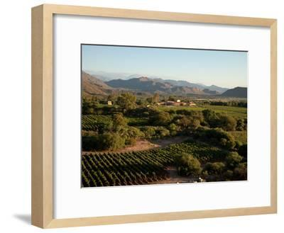 The Vineyards at a Luxury Hotel and Winery-Michael S^ Lewis-Framed Photographic Print
