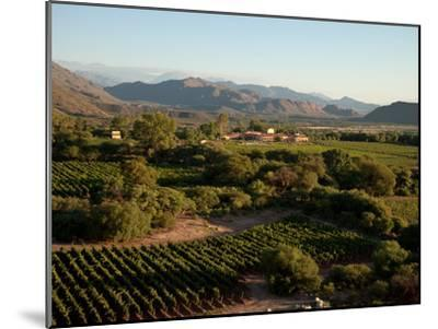 The Vineyards at a Luxury Hotel and Winery-Michael S^ Lewis-Mounted Photographic Print