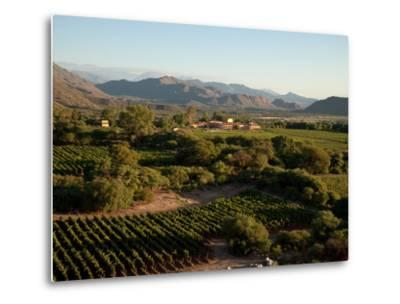 The Vineyards at a Luxury Hotel and Winery-Michael S^ Lewis-Metal Print