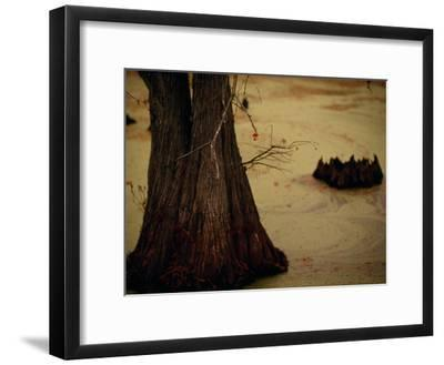 A Fishing Bobber Caught in the Branches of a Cypress Tree-Raymond Gehman-Framed Photographic Print