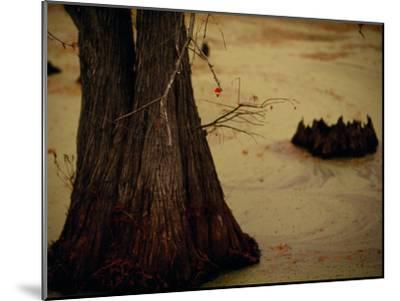 A Fishing Bobber Caught in the Branches of a Cypress Tree-Raymond Gehman-Mounted Photographic Print