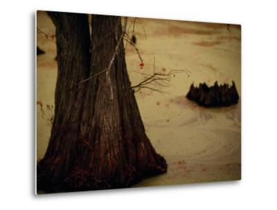 A Fishing Bobber Caught in the Branches of a Cypress Tree-Raymond Gehman-Metal Print