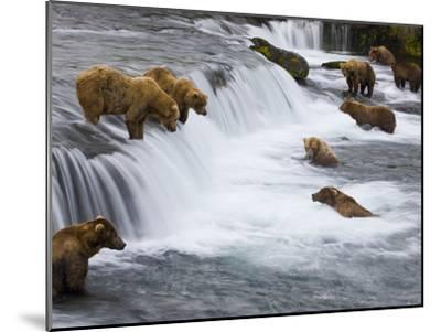 Brown Bears Wait for Sockeye Salmon to Jump at Brooks Falls-Michael Melford-Mounted Photographic Print