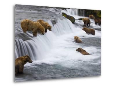 Brown Bears Wait for Sockeye Salmon to Jump at Brooks Falls-Michael Melford-Metal Print