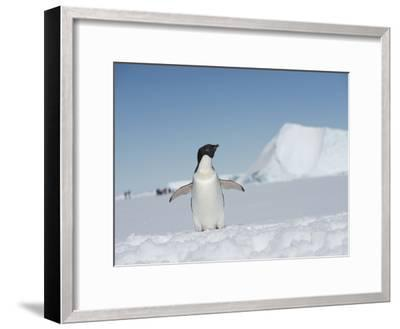 An Adelie Penguin, Pygoscelis Adeliae, on Fast Ice in the Weddell Sea-Keenpress-Framed Photographic Print