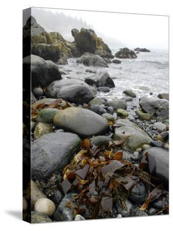 Seaweed Among Stones on a Rocky Shore with Gentle Surf-Anne Keiser-Stretched Canvas Print