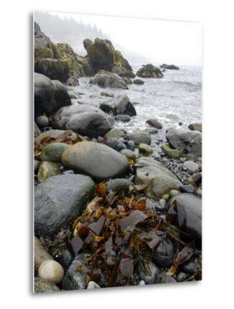 Seaweed Among Stones on a Rocky Shore with Gentle Surf-Anne Keiser-Metal Print