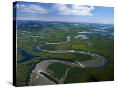 Tundra in Alaska-Danny Lehman-Stretched Canvas Print