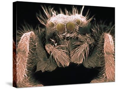 Microscopic View of Spider-Jim Zuckerman-Stretched Canvas Print