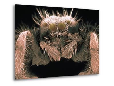 Microscopic View of Spider-Jim Zuckerman-Metal Print