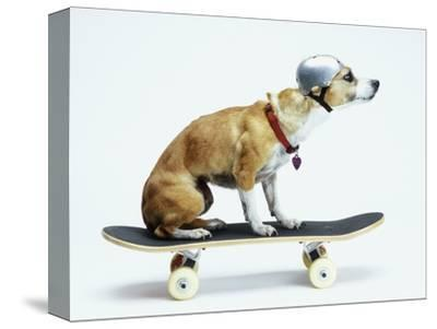 Dog with Helmet Skateboarding-Chris Rogers-Stretched Canvas Print