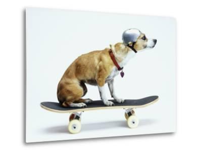 Dog with Helmet Skateboarding-Chris Rogers-Metal Print