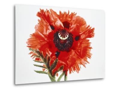 Red poppy blossom-Josh Westrich-Metal Print