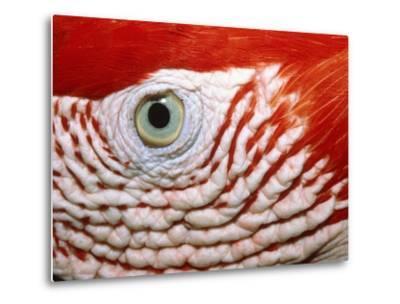 Eye of scarlet macaw-Theo Allofs-Metal Print