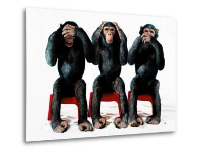 Three chimpanzees-Holger Scheibe-Metal Print