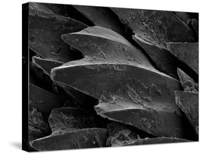 Shark Skin Scale--Stretched Canvas Print