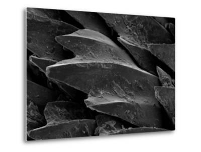 Shark Skin Scale--Metal Print