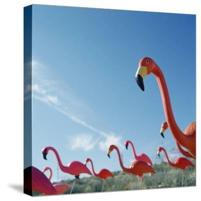 Pink flamingo lawn ornaments--Stretched Canvas Print