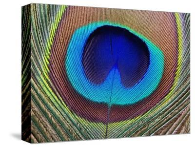Peacock Feather-Tom Grill-Stretched Canvas Print