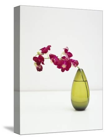Orchid Flower in a Vase-Estelle Klawitter-Stretched Canvas Print