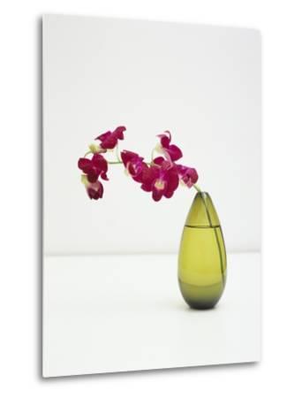 Orchid Flower in a Vase-Estelle Klawitter-Metal Print