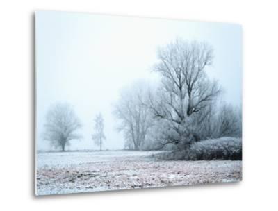 A Meadow in Winter--Metal Print