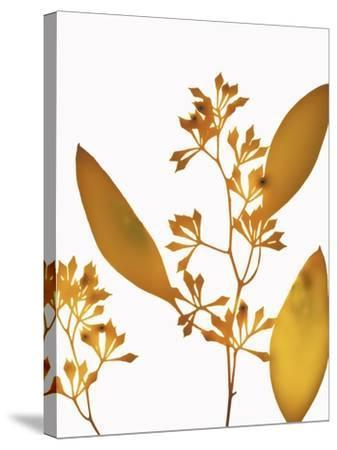 Yellow Eucalyptus-Envision-Stretched Canvas Print