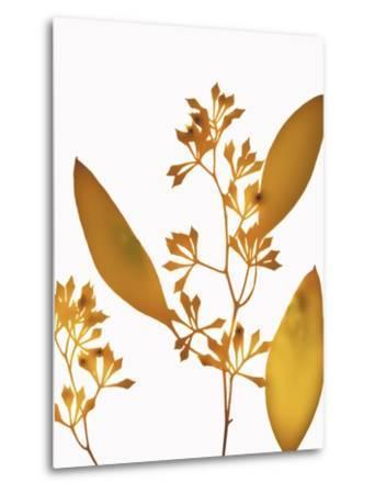 Yellow Eucalyptus-Envision-Metal Print